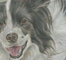 Collie dog pastel portrait Sticker
