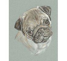 Pug dog pastel portrait Photographic Print
