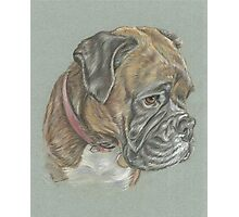 Dog pastel portrait Photographic Print