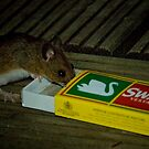 Average Contents One Mouse by GlennRoger