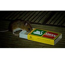 Average Contents One Mouse Photographic Print