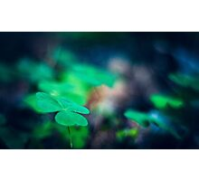 wood sorrel Photographic Print