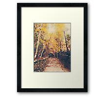 Stone Path Through a Forest in Autumn Framed Print