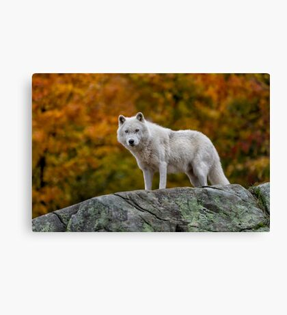 Watching you... Canvas Print