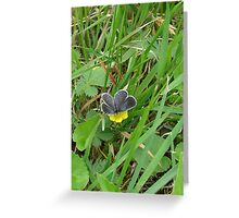 Butterfly on Buttercups Greeting Card