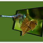 Dragonfly Out Of Bounds by ScottH711