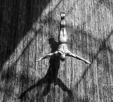 Wall Dive by Deborah V Townsend