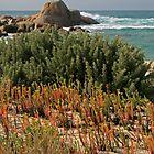 Holloway Point - Flinders Island, Tasmania by Eve creative photografix