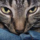 look into my eyesssssssss! by donald beynon