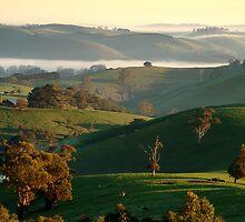 Rolling Hills, Dollar Gippsland by Joe Mortelliti
