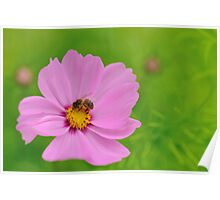 bee pink and green Poster
