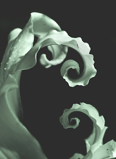 Final Twirl  by Nikki Moore