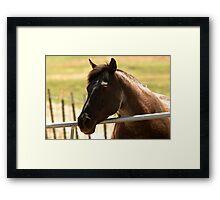 Equine Framed Print