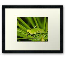 Grass Hopper  (Cuba) Framed Print