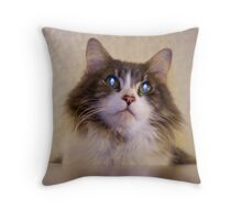 Kitty on top of the world Throw Pillow