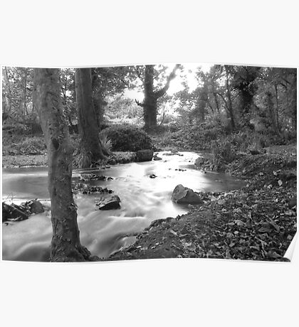 forest landscape in Penzance Cornwall Poster