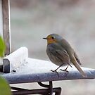 Redbreast in the frost by DebbyScott