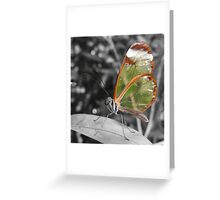 Glasswing Greeting Card