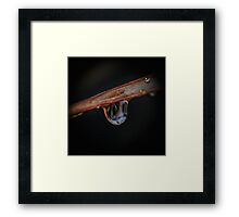 Raindrop on a leaf Framed Print