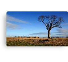 The Rihanna Tree, Alone Canvas Print