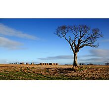 The Rihanna Tree, Alone Photographic Print