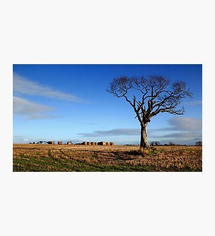 Rihanna Tree, Alone Photographic Print