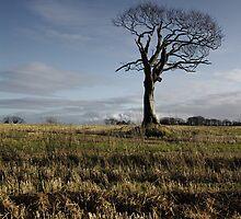 The Rihanna Tree, In Tune by Wrayzo