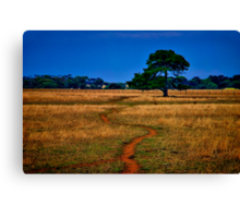 """The Sheep Track"" Canvas Print"