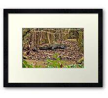 In The Wild !!! Framed Print