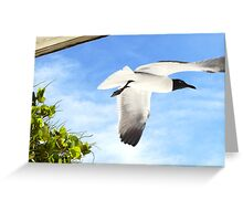 Laughing Seagull Greeting Card