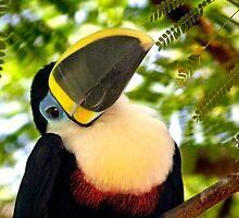 Señor Tuco by Krys Bailey