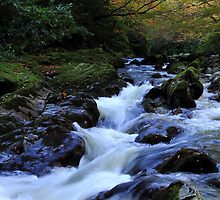 Tollymore Autumn Delight by Wrayzo