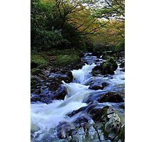 Tollymore Autumn Delight Photographic Print