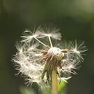 Blowing in the wind by Jenn Ridley