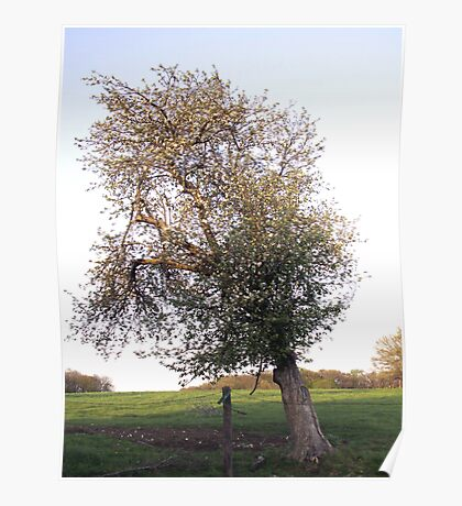 Leaning Apple Tree Poster