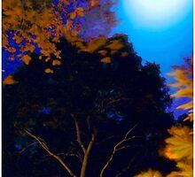 Hazy Virgin Island Night by Mark Ross