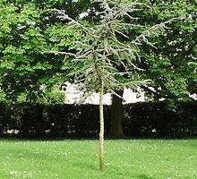 small sapling by brucemlong