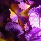 Iris by lareejc