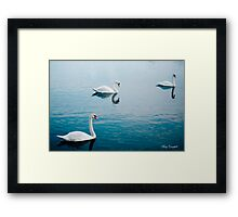 Swan Lake © Framed Print
