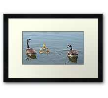 Canada Geese in training. Framed Print