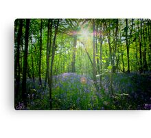 Forest Flare Canvas Print