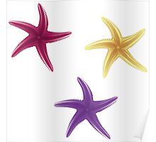 Purple, violet and yellow starfishes Poster