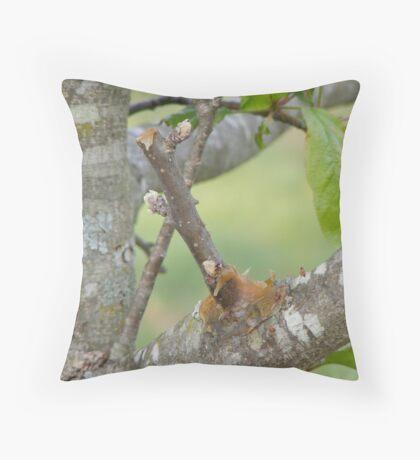 Apple Tree Grafting Throw Pillow