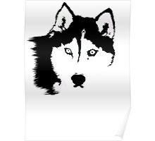Black and White Husky Poster