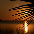 The Palm Leaf and the Setting Sun by Deborah V Townsend