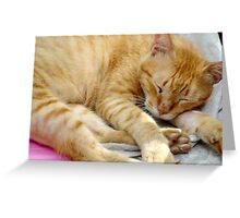 Not Easy Being A Stray (Print) Greeting Card