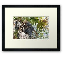 Have You Ever Dated a Date Tree? Framed Print