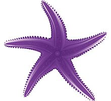Violet starfish Photographic Print