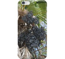 Have You Ever Dated a Date Tree? iPhone Case/Skin