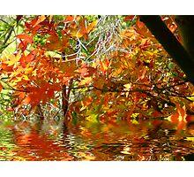 Autumn Leaves.. Photographic Print